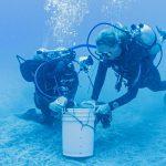 UCN lidera equipo que estudia en Rapa Nui algas poco conocidas y con un rol ecológico importante
